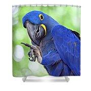 Blue Hyacinth Macaw Shower Curtain