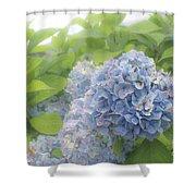 Blue Hydrangea At Rainy Garden In June, Japan Shower Curtain