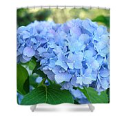 Blue Hydrangea Flowers Art Botanical Nature Garden Prints Shower Curtain