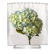 Blue Hydrangea Spray Shower Curtain