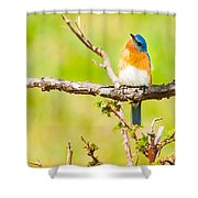 Blue In Green Shower Curtain