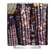 Blue Indian Corn Shower Curtain
