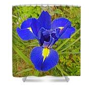 Blue Iris Beauty Shower Curtain