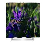 Blue Iris Field  Shower Curtain