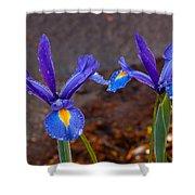 Blue Iris Germanica Shower Curtain