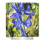 Blue Iris Painting Shower Curtain