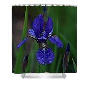 Blue Iris Petal Shower Curtain