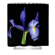 Blue Iris Shower Curtain