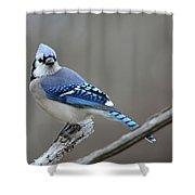 Blue Jay 2 Shower Curtain
