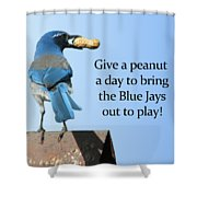 Blue Jay And A Peanut Shower Curtain