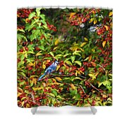 Blue Jay And Berries Shower Curtain