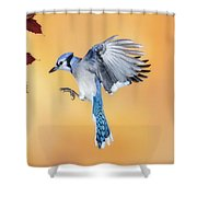 Blue Jay Beauty Shower Curtain