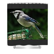 Blue Jay Day Shower Curtain