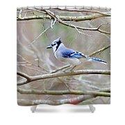 Blue Jay Shower Curtain by George Randy Bass