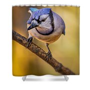 Blue Jay In Golden Light Shower Curtain