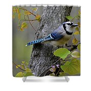 Blue Jay In Red Bud Shower Curtain
