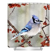 Blue Jay In Snowfall 3 Shower Curtain