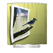Blue Jay Perched Shower Curtain