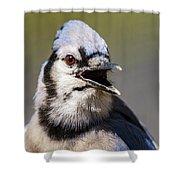 Blue Jay Portrait Shower Curtain