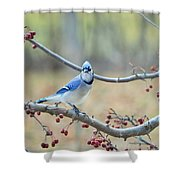 Blue Jay Poses In Crab Apple Tree Shower Curtain