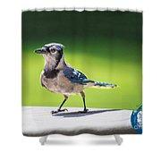 Blue Jay Walk Shower Curtain
