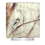 Blue Jay Winter Shower Curtain