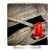 Blue Jeans Frog Shower Curtain
