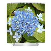Blue Lacecap Hydrangeas Shower Curtain