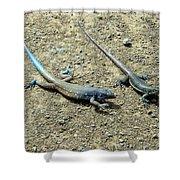 Blue Lizards Shower Curtain