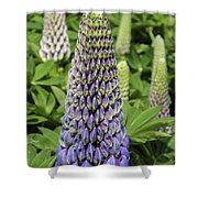 Blue Lupin Shower Curtain