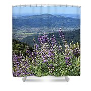 D3b6377-blue Lupine And Kenwood  Shower Curtain