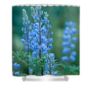 Blue Lupine In The Tetons  Shower Curtain