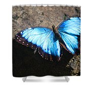 Blue Morpho #2 Shower Curtain
