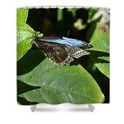 Blue Morpho Among The Leaves Shower Curtain