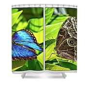 Blue Morpho Butterfly Diptych Shower Curtain