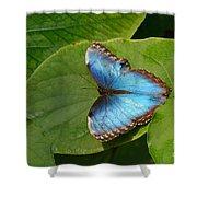 Blue Morpho Butterfly II Shower Curtain