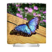 Blue Morpho Butterfly On A Wooden Board Shower Curtain