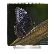 Blue Morpho.. Shower Curtain