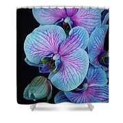 Blue Orchid On Black Shower Curtain