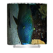 Blue Parrot Fish Shower Curtain