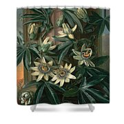 Blue Passion Flower For The  Temple Of Flora By Robert Thornton Shower Curtain