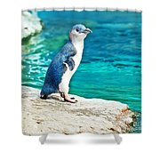 Blue Penguin Shower Curtain