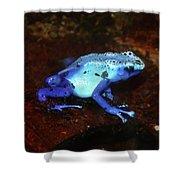 Blue Poison Dart Frog - Dendrobates Azureus Shower Curtain