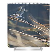 Blue Pond Shower Curtain