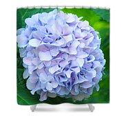 Blue Purple Hydrandea Floral Art Botanical Prints Canvas Shower Curtain