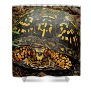 Blue Ridge Box Turtle Shower Curtain