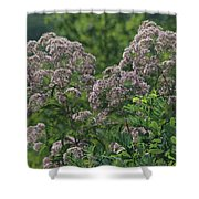 Blue Ridge Flowers Shower Curtain