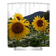 Blue Ridge Sunflowers  Shower Curtain