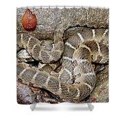 Montreat Water Snake Shower Curtain