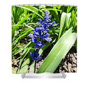 Blue Sage Shower Curtain